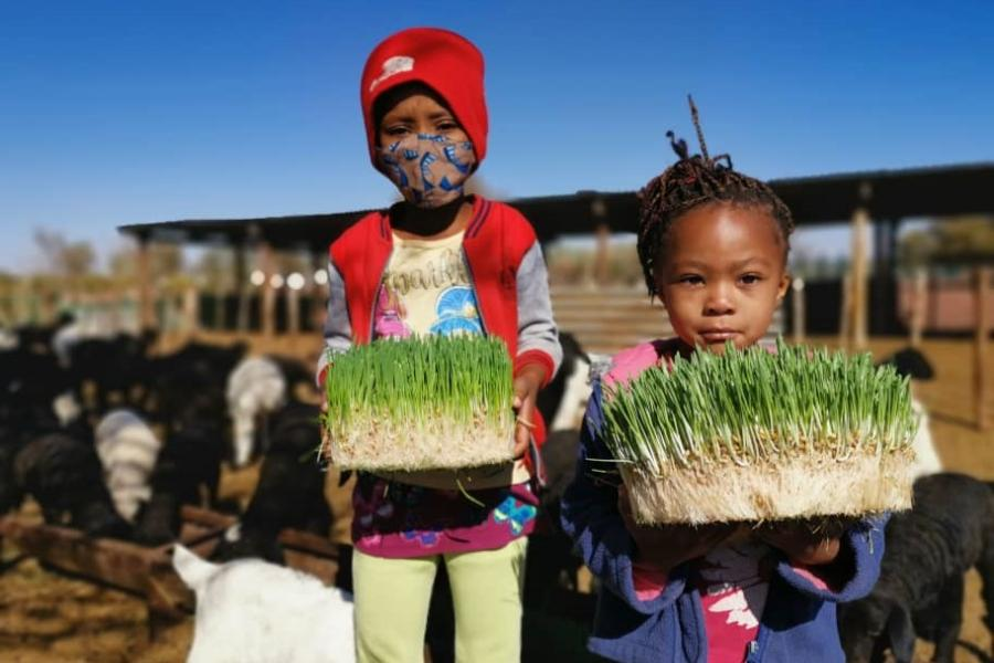 Children holding fresh fodder dervived from a structure located in Amalia, a small village south of Namibia